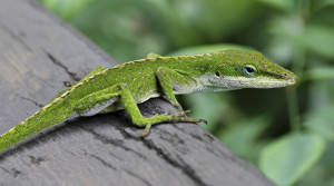 This the one lizard that your child could be taking home if he/her took this amazing camp